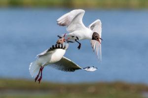 Vögel auf Texel 122 300x200 Urlaub auf Texel: <br/>Ferienwohnung von privat