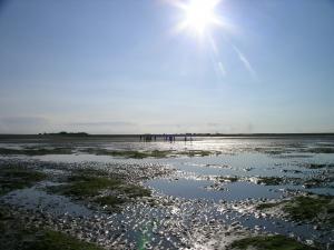 ochtend wad 300x225 Exkursion: Morgenstimmung im Wattenmeer