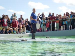 Ganz nah dran: Seehundfütterung bei Ecomare