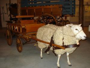 Schafe im Museum: kulturhistorische Einblicke für Urlauber. (Foto: Annette Barhorst)